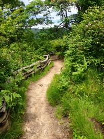 One of the trails at Graveyard Fields, NC. God's path through the valley of darkness.