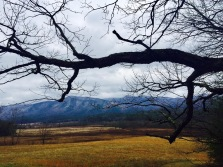Cades Cove, TN Jan 2017