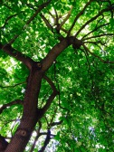 I sat under this beautiful tree in London to get out of the rain. Such a gorgeous natural space inside a huge busy city.